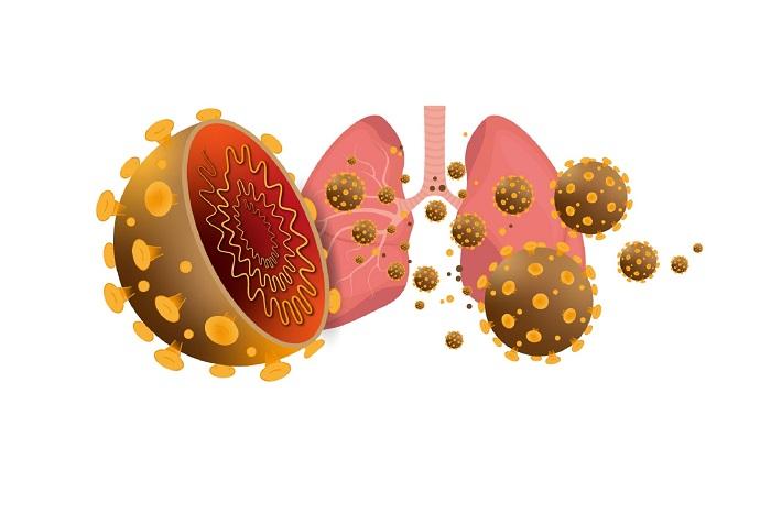 Virus corona là gì