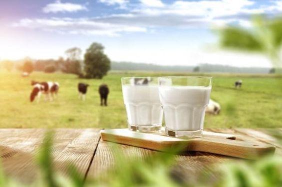 Top 8 sữa tươi organic cho bé được tin dùng nhất hiện nay