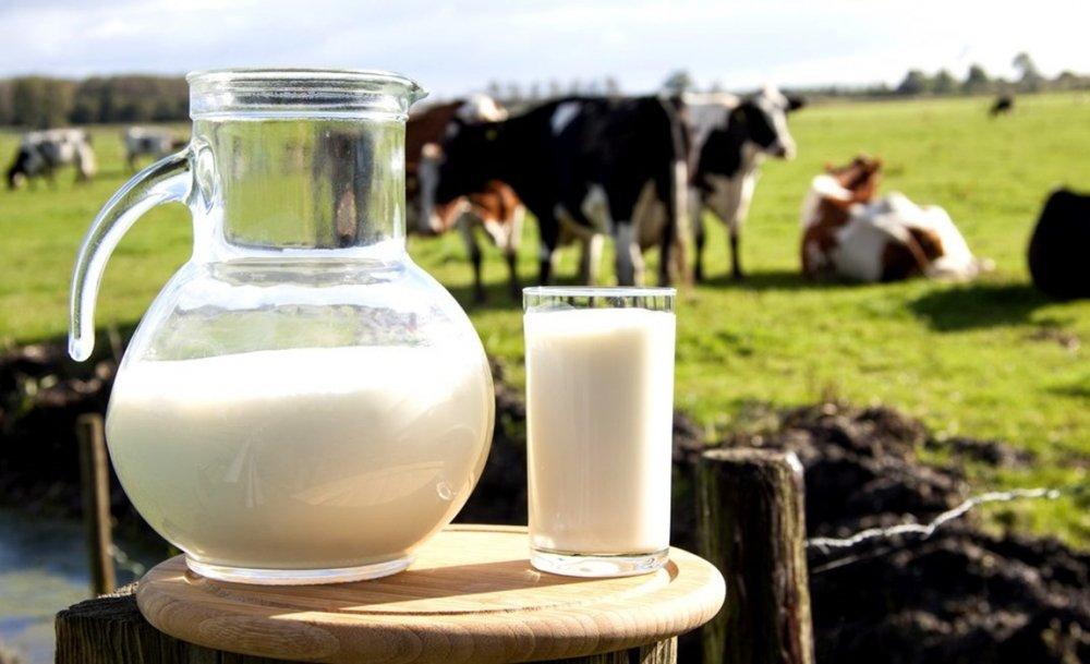 Bé 1 tuổi nên uống sữa thanh trùng hay tiệt trùng?
